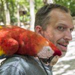 Roatan Parrot 1